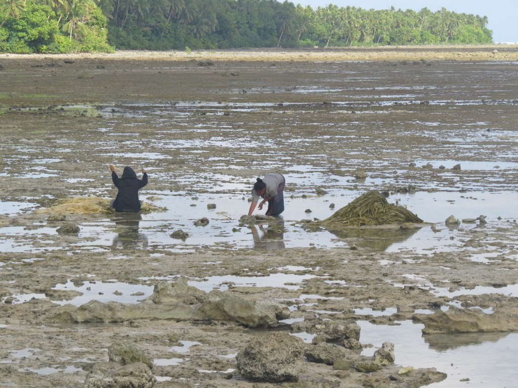 Tongan women washing pandanus for weaving